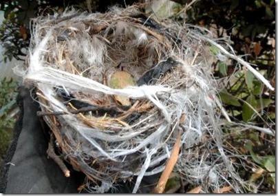 ビニール製の巣
