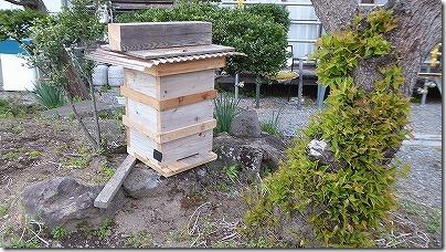 蜜蜂の捕獲